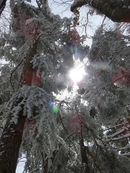 丹沢三峰大雪