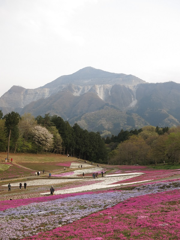武甲山登山と羊山公園芝桜祭りの写真
