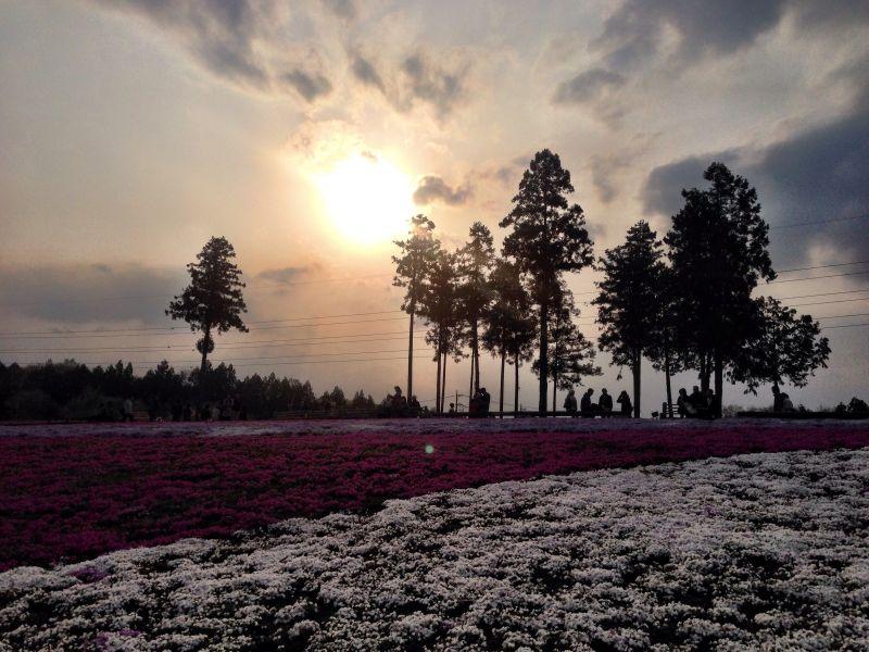 羊山公園からの夕日
