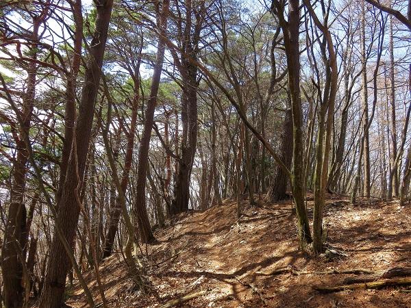 フラットで癒しの道が釈迦ヶ岳の途中まで続く