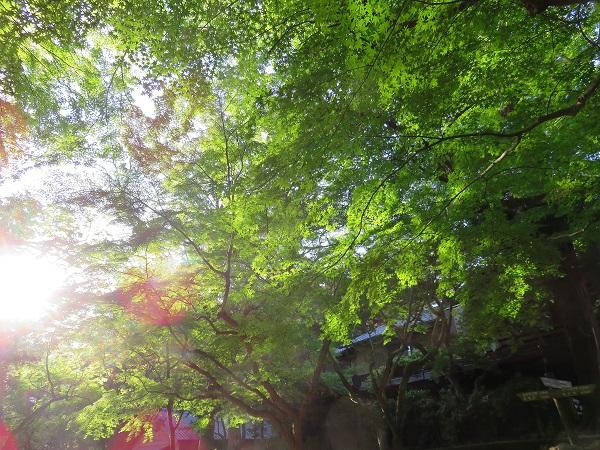 春日大社内の新緑