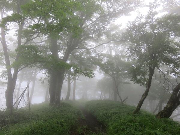 塔ノ岳から丹沢山へ