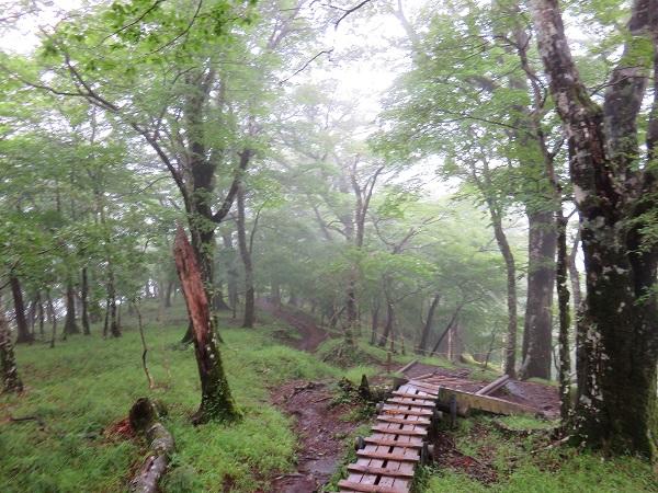 濡れた木道木の根っこが滑り鍋割山方面は歩くのが大変