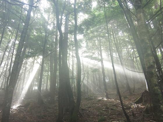 日本の夜明けと木漏れ日