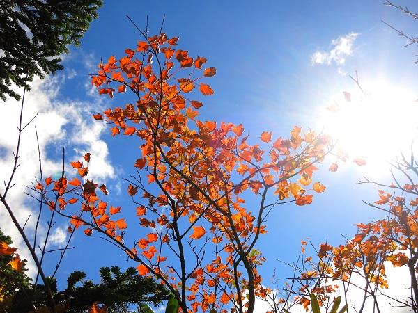 武尊山付近の紅葉