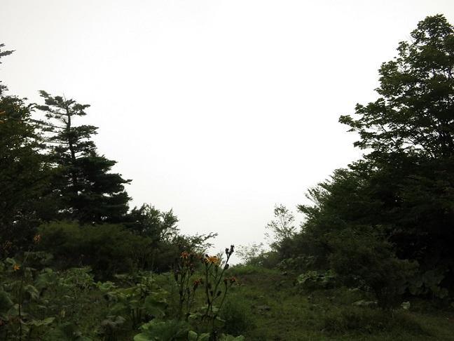 毛無山の山頂からの展望n