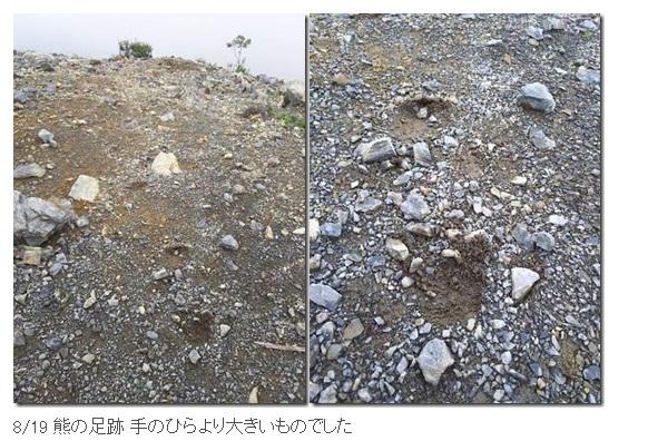 北岳山荘に出没したクマの足跡