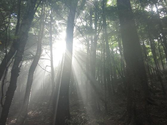 癒しの木漏れ日