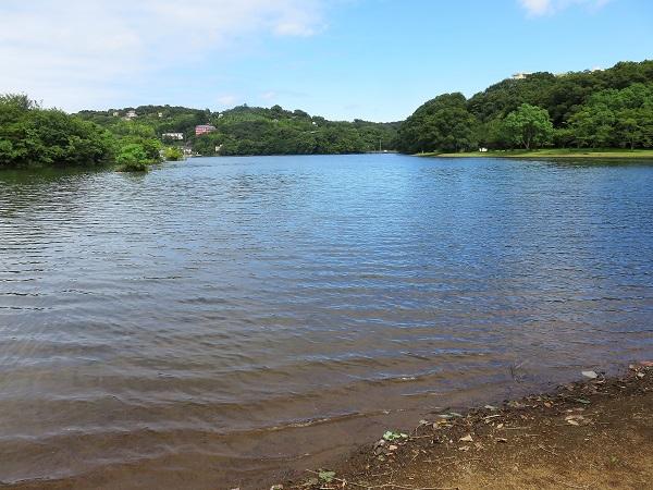 一碧湖のお水