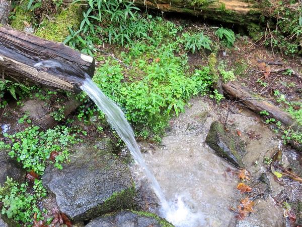 笠取小屋の水場水量豊富
