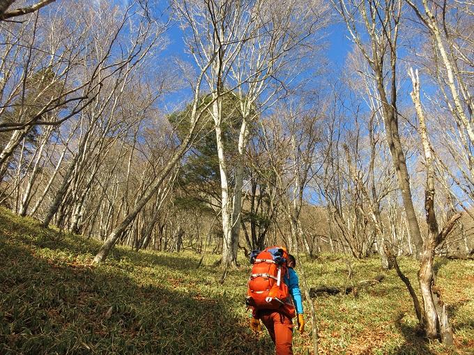 両神山剣ヶ峰に近づくと笹の世界
