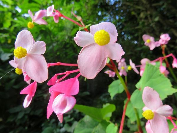 日向薬師周辺の花