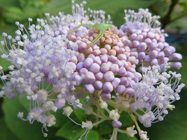 変な物体とと花