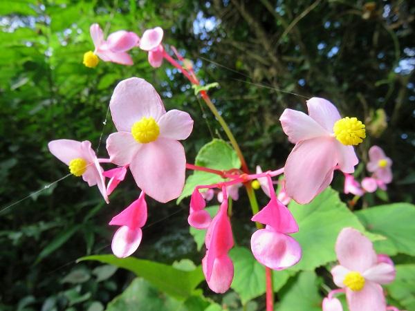 ピンク色お花