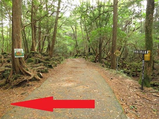 青木ヶ原樹海トレッキングコース富岳風穴・鳴沢氷穴