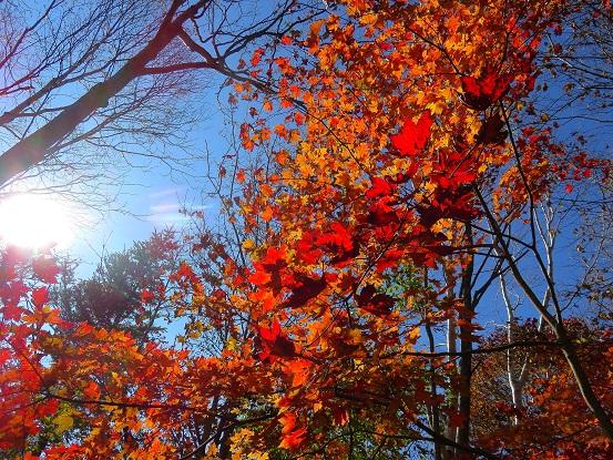 小金沢山周辺紅葉