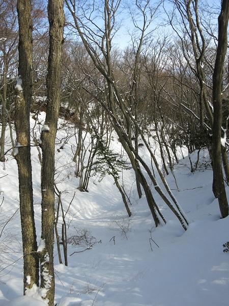 最乗寺奥之院から明神ヶ岳へ進む