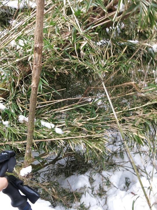 積雪期の箱根外輪山縦走竹藪