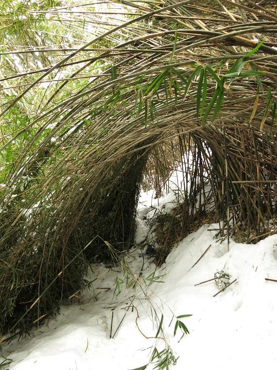 芸術的な竹藪の登山道