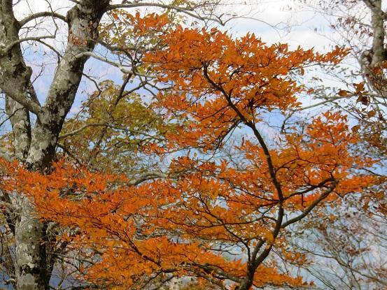 蛭ヶ岳山頂紅葉の見頃