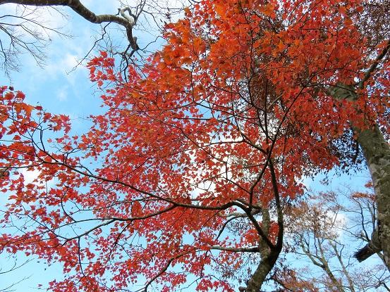 丹沢主稜縦走路の紅葉