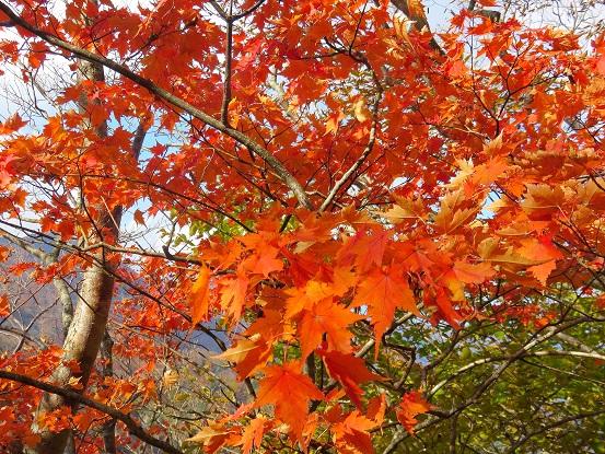 臼ヶ岳の山頂付近紅葉
