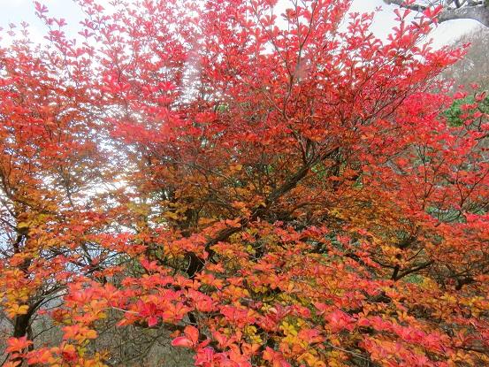 桧洞丸紅葉が綺麗