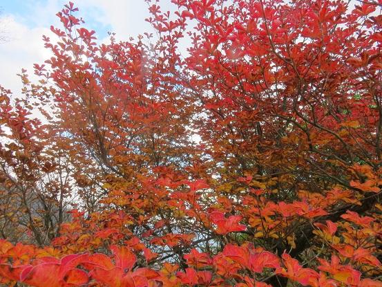 紅葉が綺麗な時期丹沢主稜縦走