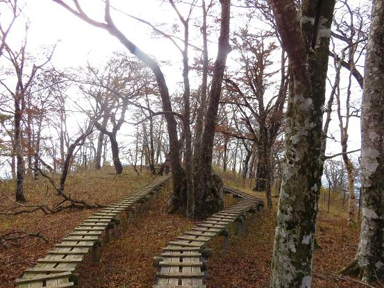 桧洞丸の山頂木道歩き