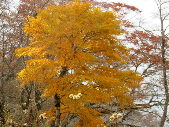 石棚山(石棚山稜)の紅葉