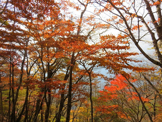 石棚山周辺の紅葉