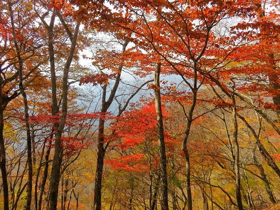 紅葉の旬の時期石棚山稜