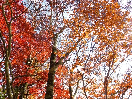 石棚山の急斜面美しい紅葉