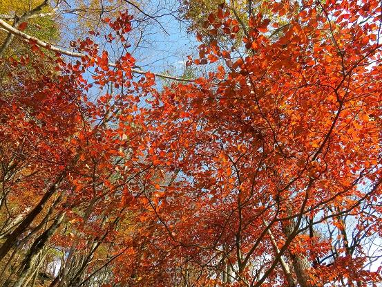 石棚山の紅葉を独り占め