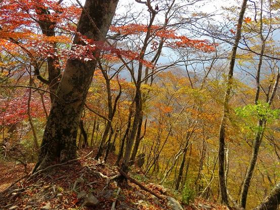 石棚山標高1,100mから上が天然林