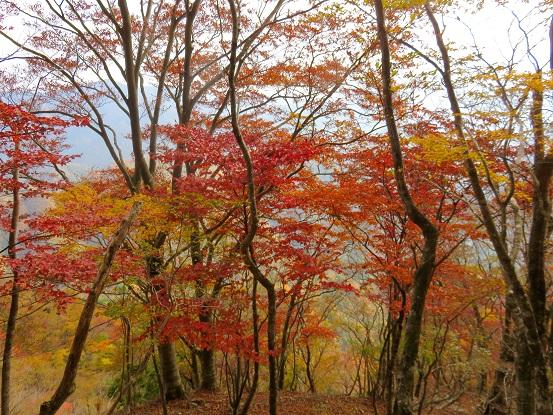 石棚山紅葉リミット