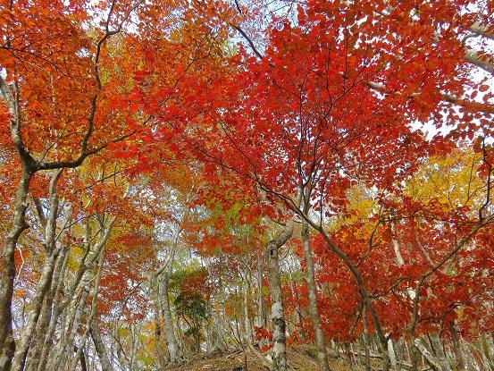 紅葉の丹沢主稜縦走路