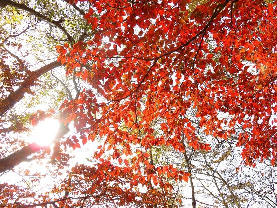綺麗な紅葉を見れて大満足