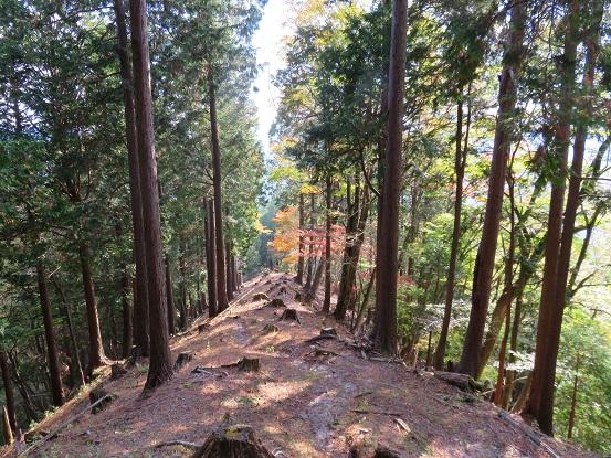 杉の植林地帯