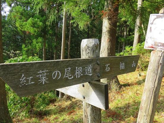 西丹沢県民の森の遊歩道