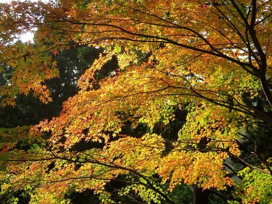 西丹沢県民の森周辺の紅葉