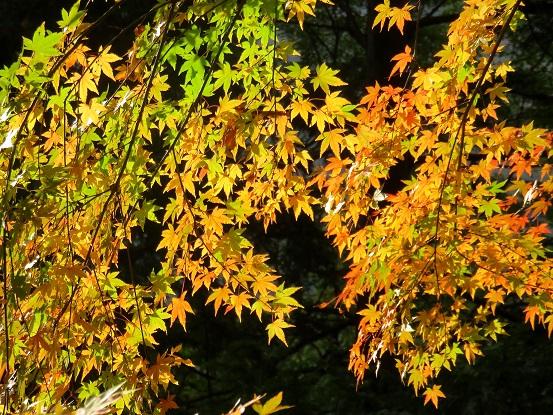 色付き始めの紅葉