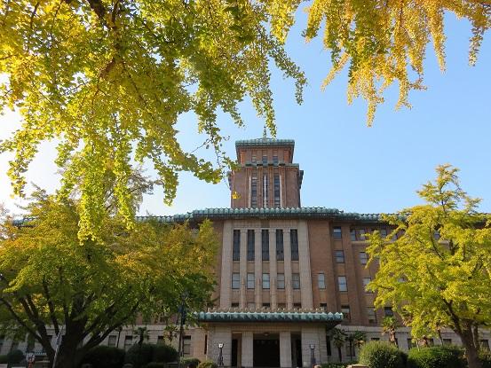 横浜日本大通りのイチョウ並木の紅葉