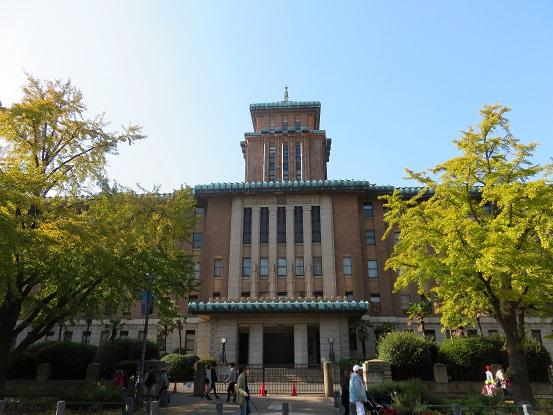 神奈川県庁イチョウ並木
