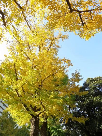 横浜綺麗紅葉