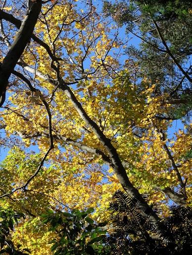 天覚山周辺の紅葉