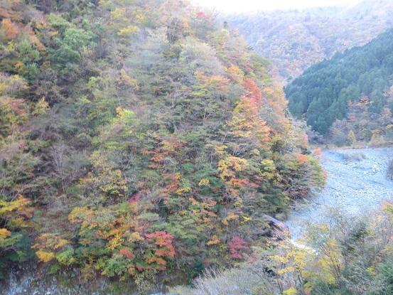 神ノ川の山腹の紅葉