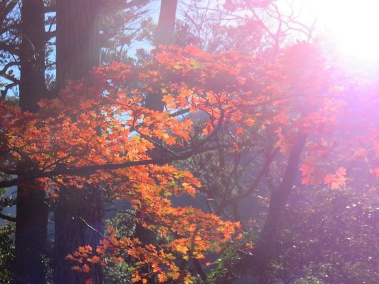 地蔵尾根紅葉