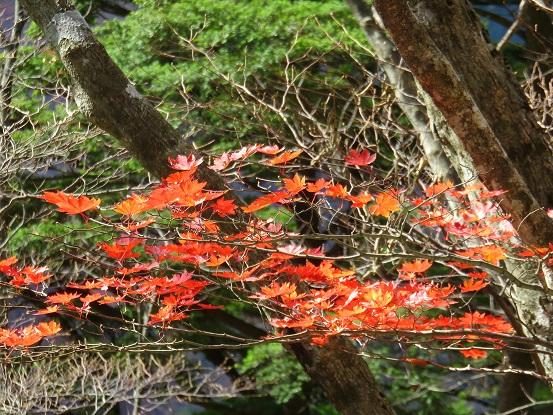地蔵平見頃な紅葉