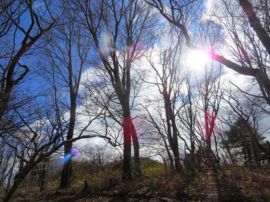 落葉した木々青空